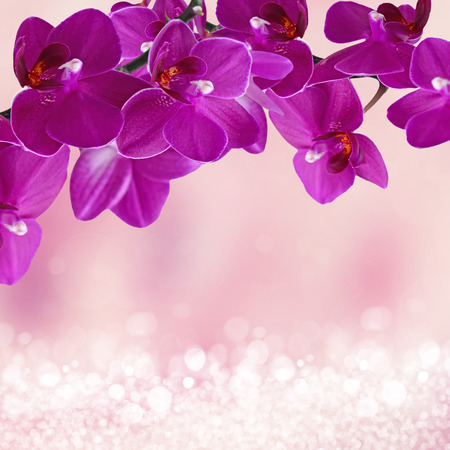 Close-up of pink orchid phalaenopsis Stock Photo