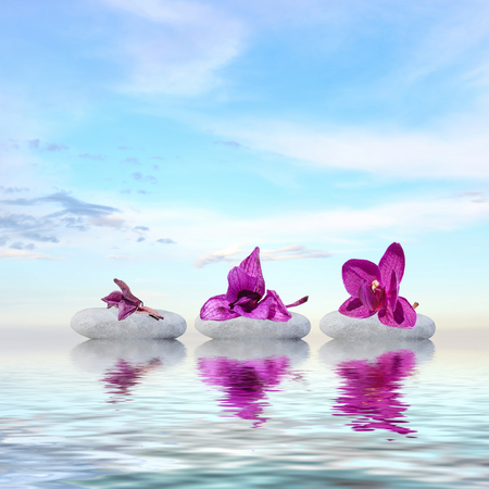 wilting: Zen concept of time or age-different stages of wilting orchid flower on stones