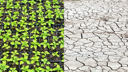 earth pollution: Dry land and fertile soil.Concept of climate change,seasonality,drought and crop