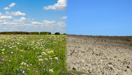 Dry land and fertile soil.Concept of climate change,seasonality,drought and crop