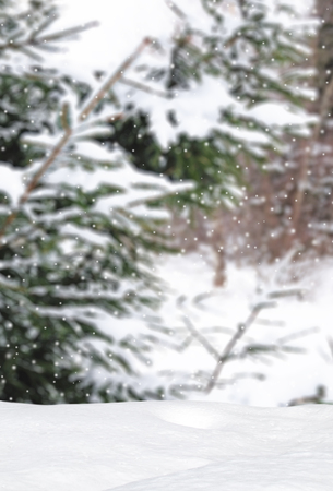 snow covered forest: Winter wonderland background in snow covered forest Stock Photo