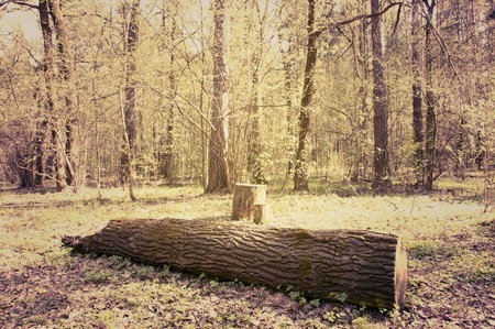 toned: Spring forest. Photo toned in vintage style