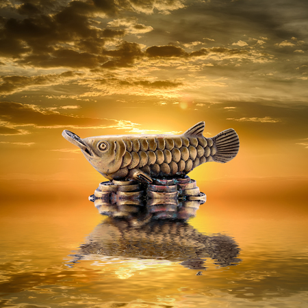 arowana: Feng Shui background. Silver arowana is reflected in water at sunrise