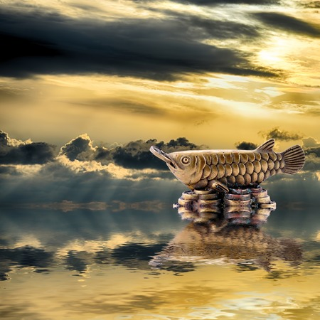 Feng Shui background. Silver arowana is reflected in water at sunrise
