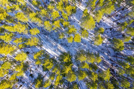 Beautiful spring forest as background. Aerial top view