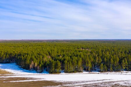 On the border of forest and field the snow melts. Aerial drone shot