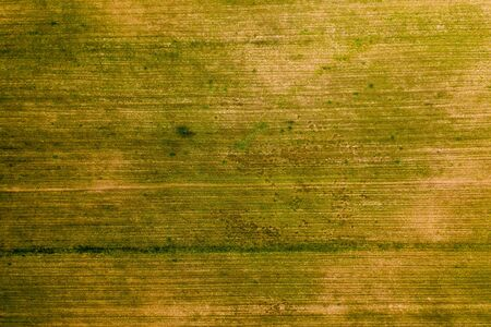 Young grass on the agricultural field, after the snow melt. On the field visible traces of transport. Abstract aerial view background Standard-Bild - 131956267