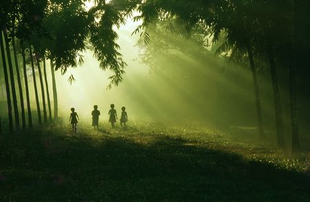 timberland: The children walking and playing in bright morning.