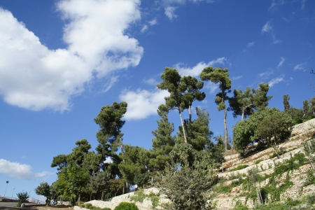 Beautiful scenery, the tall pines on the hill against a blue, cloudy sky  Stock Photo