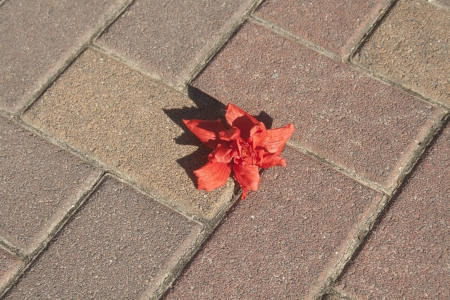 Still life with а red flower on the road.