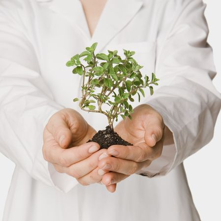 scientists hands holding forward a small seedling Stock Photo