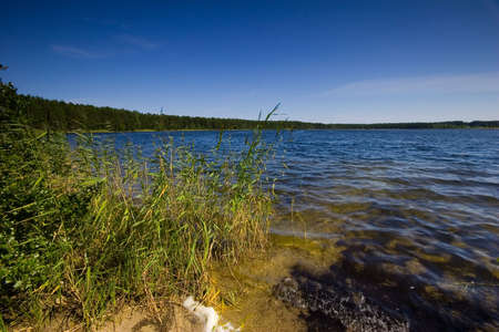 The lake in forest Stock Photo - 498571