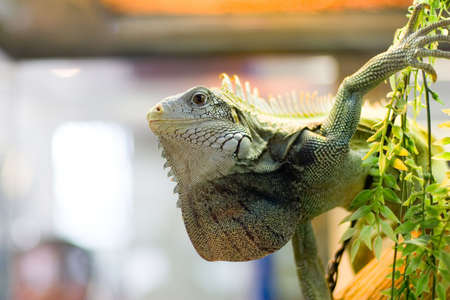 vivarium: the lizard in the zoo