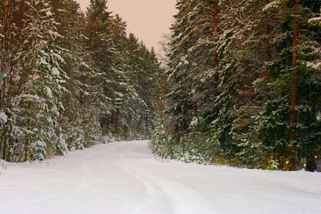 the road in forest under snow photo
