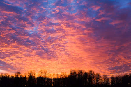 the threatening flame-colored sunset over silhouettes of trees Stock Photo