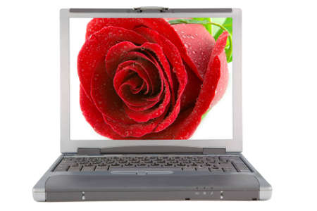 the laptop with rose background with clipping path photo