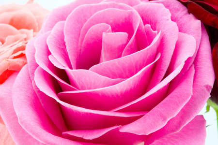 the fragment of bouquet from three roses macro photo