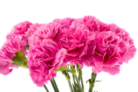 the bouquet from pink carnations on white background Stock Photo