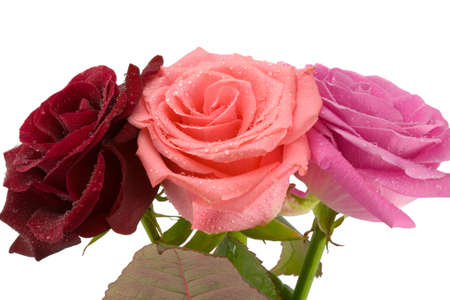 the bouquet from three roses with water drops isolated photo
