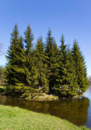 reverberation: the small islet with high firs in park