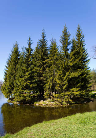 islet: the small islet with high firs in park