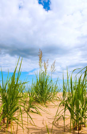 the bush of cane on sky background Stock Photo - 3386044