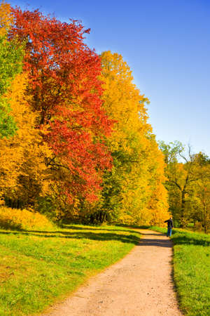 the autumn landscape with yellow, red and green trees photo