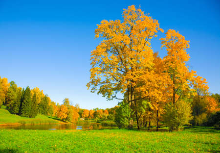 le paysage d'automne avec du jaune d'arbres et petit �tang Banque d'images