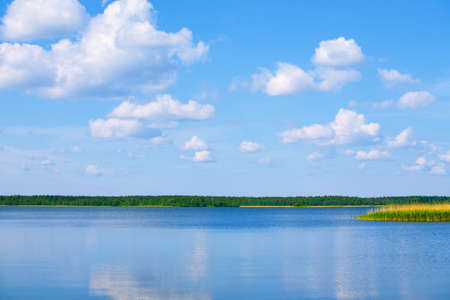 lake with cane, sky and clouds, summer landscape