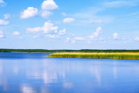 lake with cane, sky and clouds, summer landscape Stock Photo - 4877535