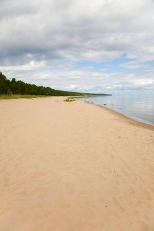 the row of pines and feers on a summer beach photo