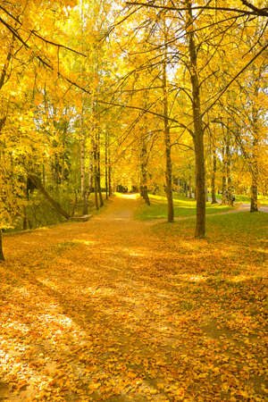 the autumn landscape with yellow, red and green trees Stock Photo - 5227230