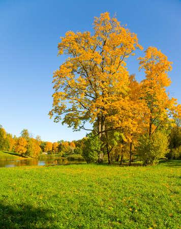 l'automne, le paysage avec des arbres et jaune petit �tang Banque d'images