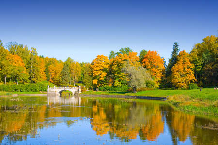 yelow: the autumn landscape witn yelow trees and small pond Stock Photo