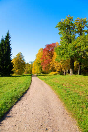 the autumn landscape with yellow, red and green trees Stock Photo - 6389119