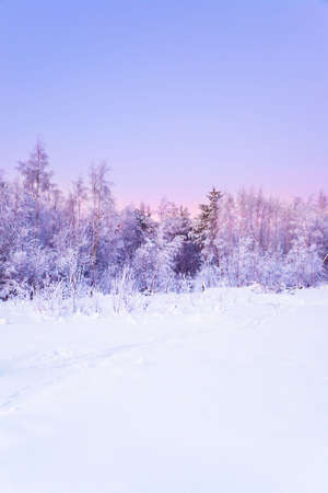 The winter landscape in the frozen forest Stock Photo - 6389152