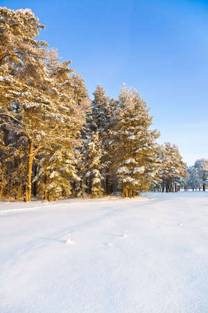 The winter landscape in the frozen forest Stock Photo - 6389155
