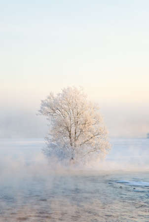 The foggy river with the frozen trees Stock Photo - 6389118