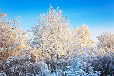 The winter landscape in the frozen forest Stock Photo - 6389129