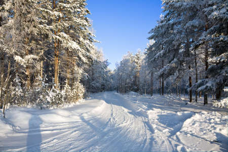 The winter landscape in the frozen forest Stock Photo - 6389172
