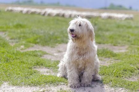 muddy: Muddy god