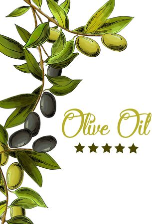 Vector template with black and green olives on white background.