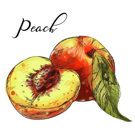 Hand drawn sketch style peach fruit.