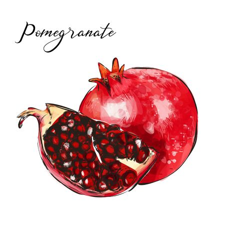 Vector illustration of pomegranate.