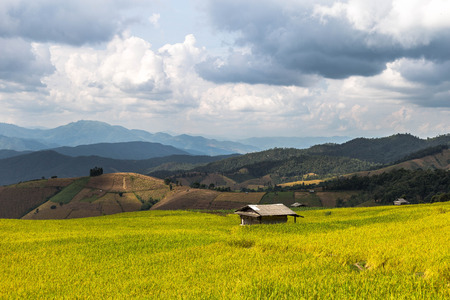 terraced: Terraced rice field in Pa Pong Pieng. Chiang Mai, Thailand.