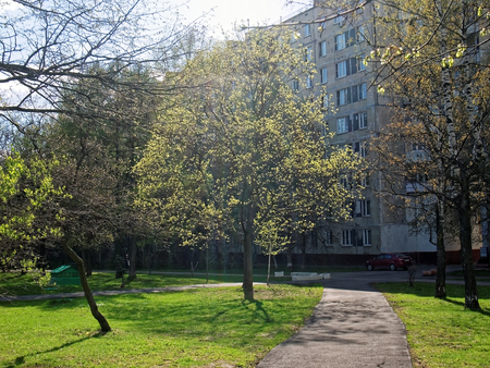 Tree with young leaves in spring, Moscow court, district Teply Stan