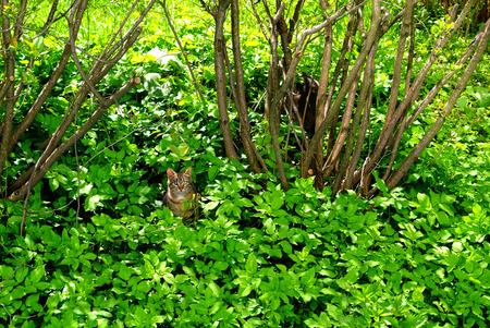 the cat near the bushes in the grass, Moscow Stock Photo