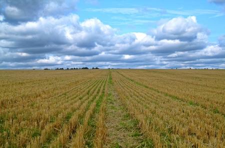 Sloping field in autumn in Russia, Tula region