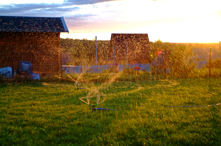 drip irrigation in the garden in the evening, Russia
