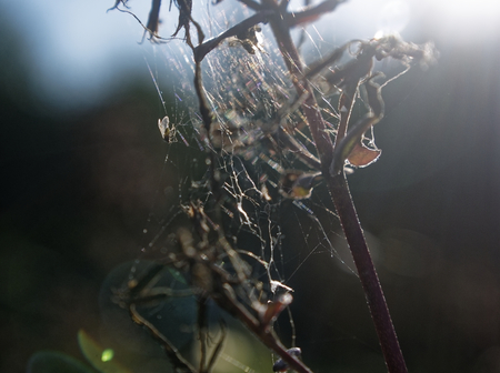 spider web on top of flowers in garden, Russia